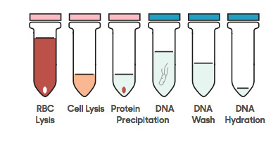 DANAGENE BLOOD DNA KIT-2