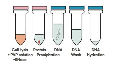 DANAGENE PLANT DNA KIT-2