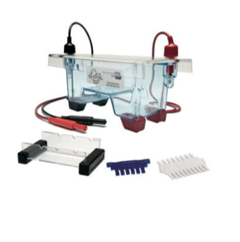 imgcat-ELECTROFORESIS-DE-ADN