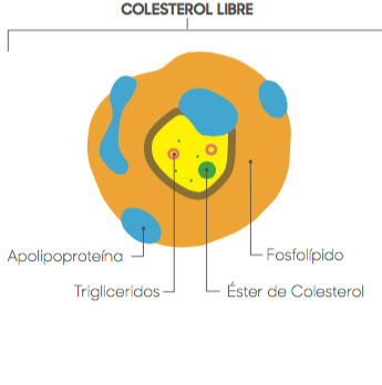 imgcat-colesterol